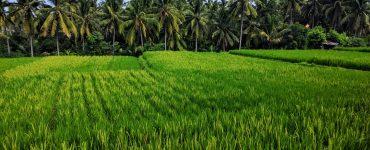 Ką veikti ir ko neveikti Ubude (Balis. Indonezija)