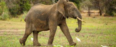 Safaris Tanzanijoje: Selous