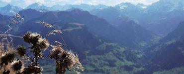 Šveicariškas atvirukas: kopimas į Niesen viršūnę