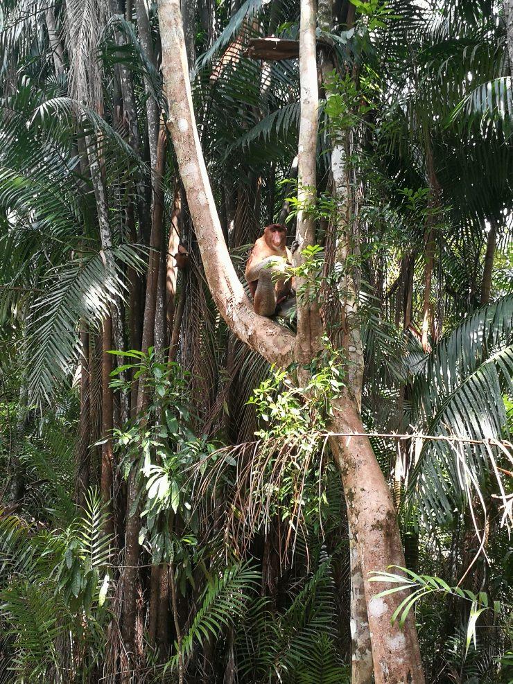 Malaizija. Borneo salos laukinė gamta
