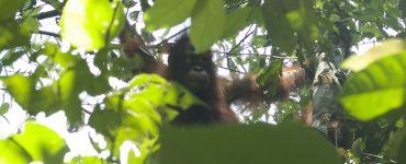 Borneo – susitikimas su miško žmonėmis