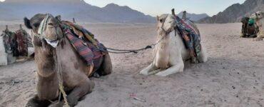 Pasiruošk atostogoms Egipte