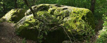 Vepriai akmenų apsupty